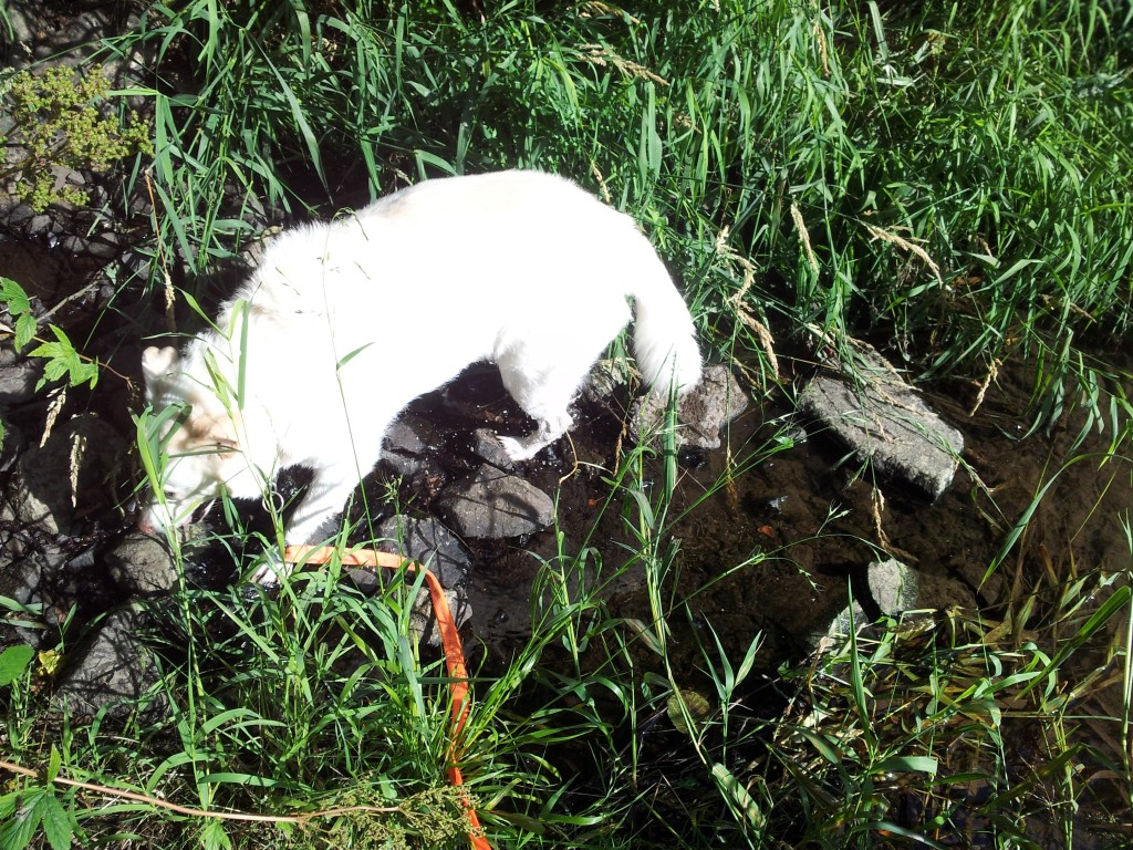 Leihhund Yello